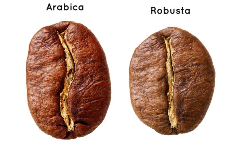 西雅图咖啡掺低价豆,品质、口感差在哪?